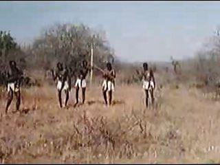 Africanos enormes penes! Safari real!