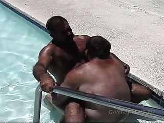 Osos en la piscina