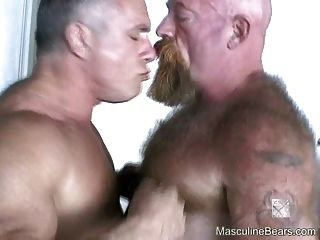 Los osos peludos grandes disfrutan de la fucking áspera