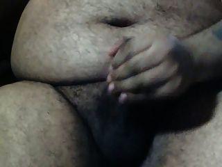 Gran vientre oso solo en la oficina