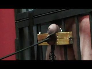Polla grave y tortura de pelota