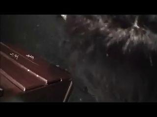 Amateur cd chupar y puta cruda de mierda negro