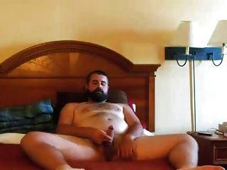 paja de oso barbudo oso barbudo tirones en la cama