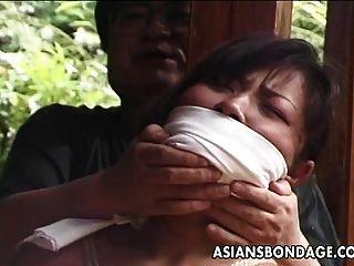 atado puma asiático maduro a una viga de la casa